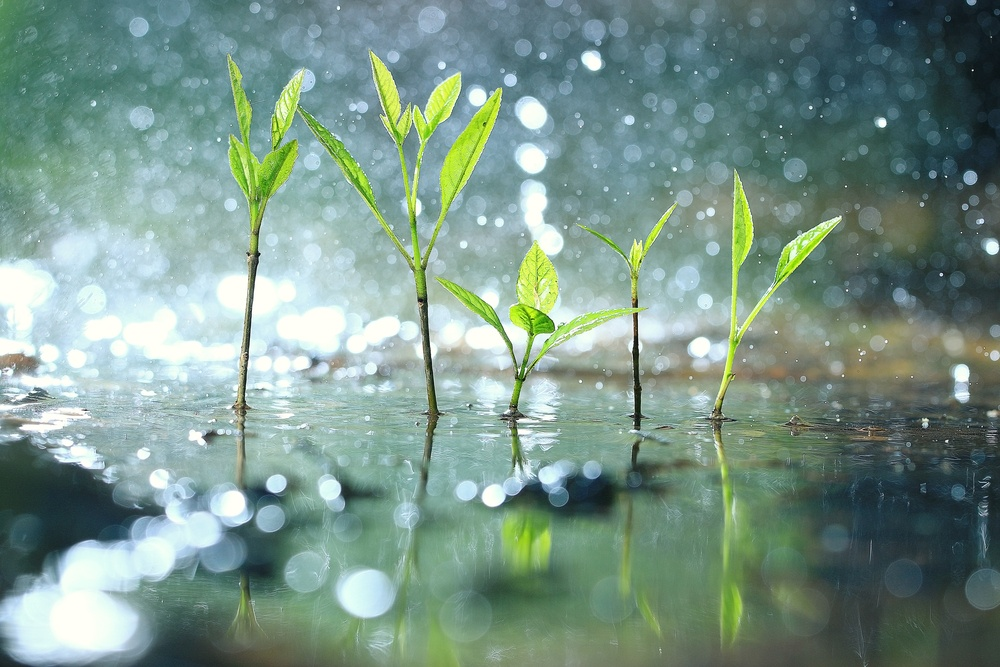 o que significa sonhar com chuva