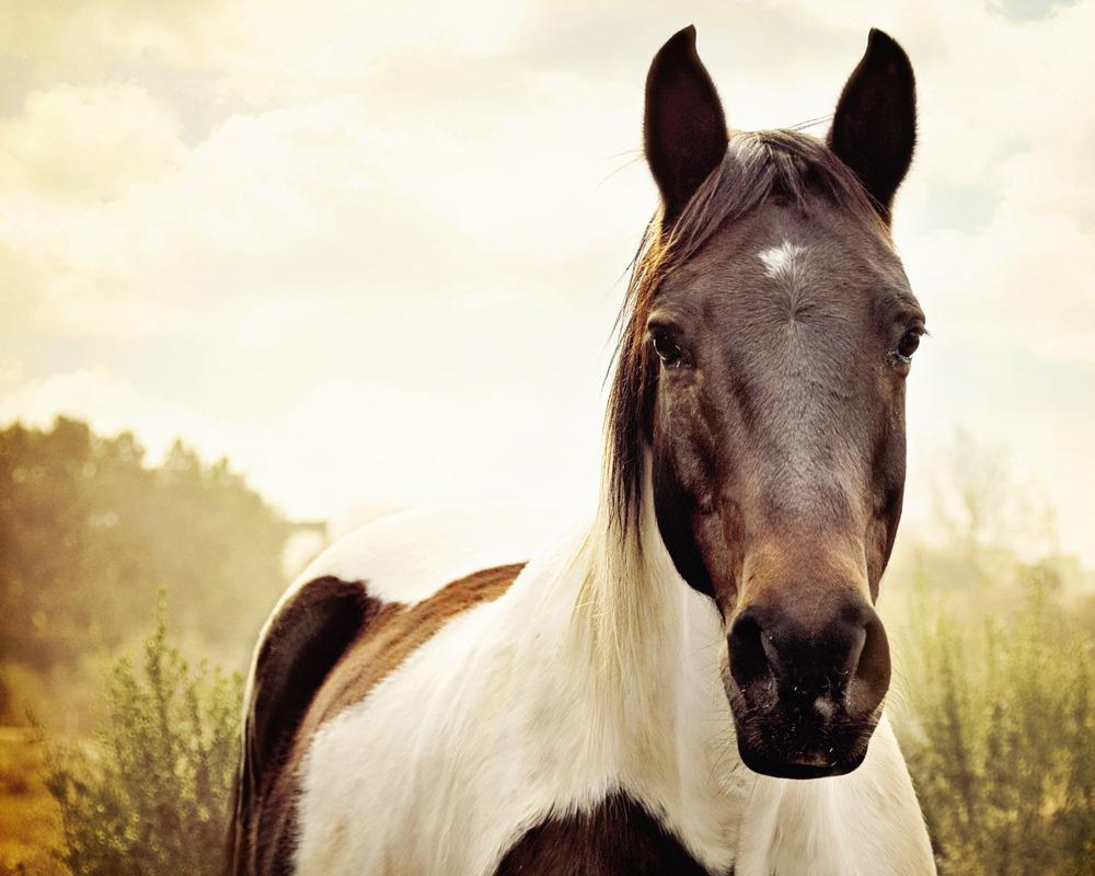 sonhar com cavalo