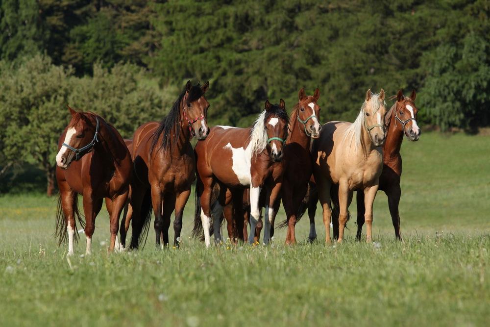 sonhar com muitos cavalos
