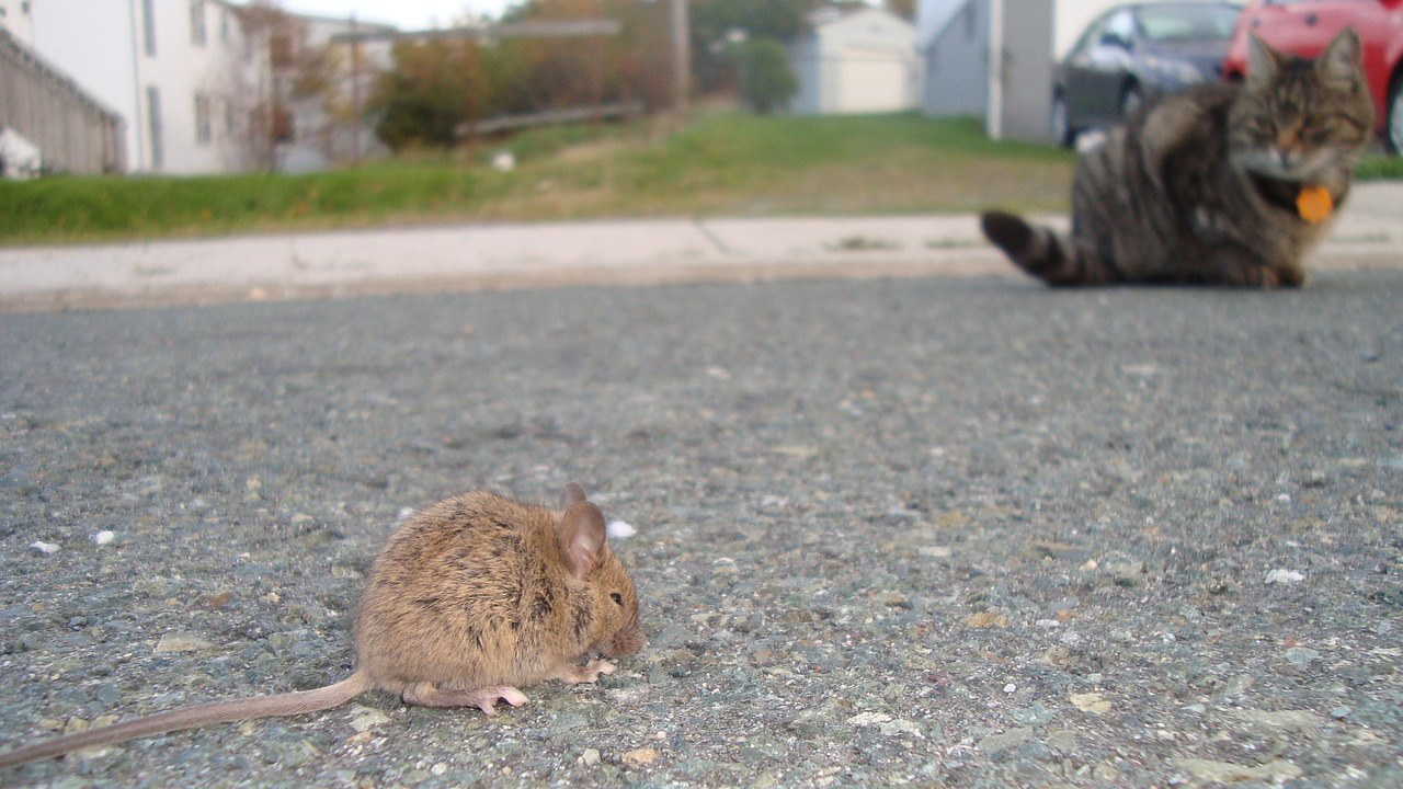 sonhar com rato e gato