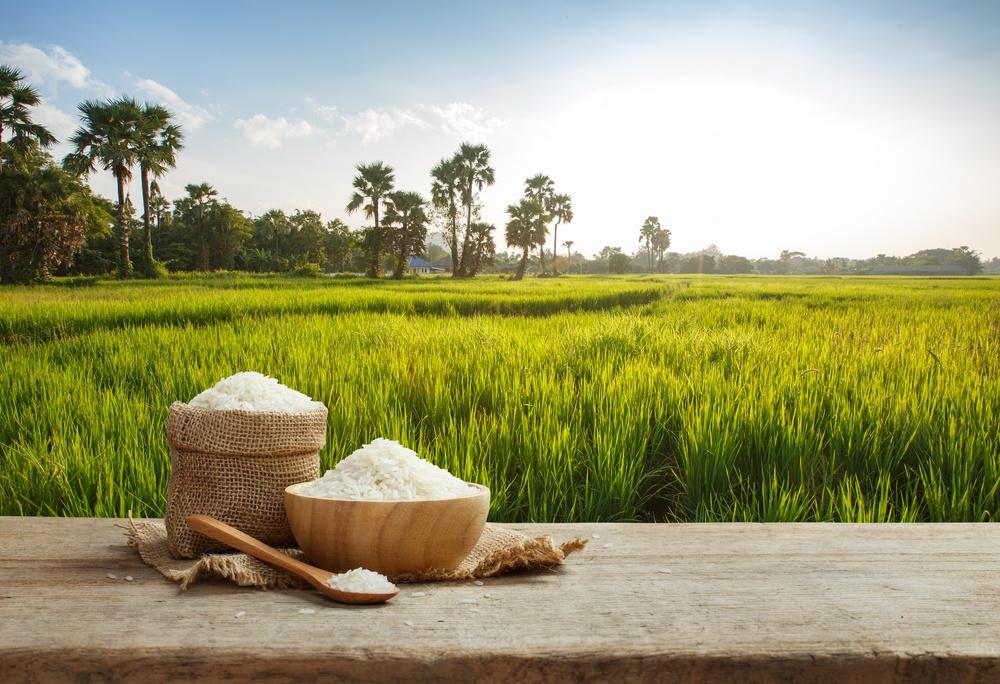 significado de sonhar com arroz