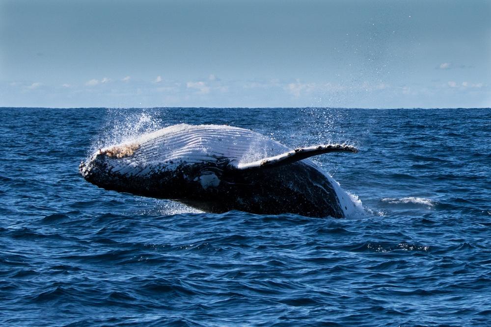 sonhar com baleia pulando
