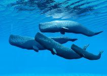 sonhar com baleias nadando
