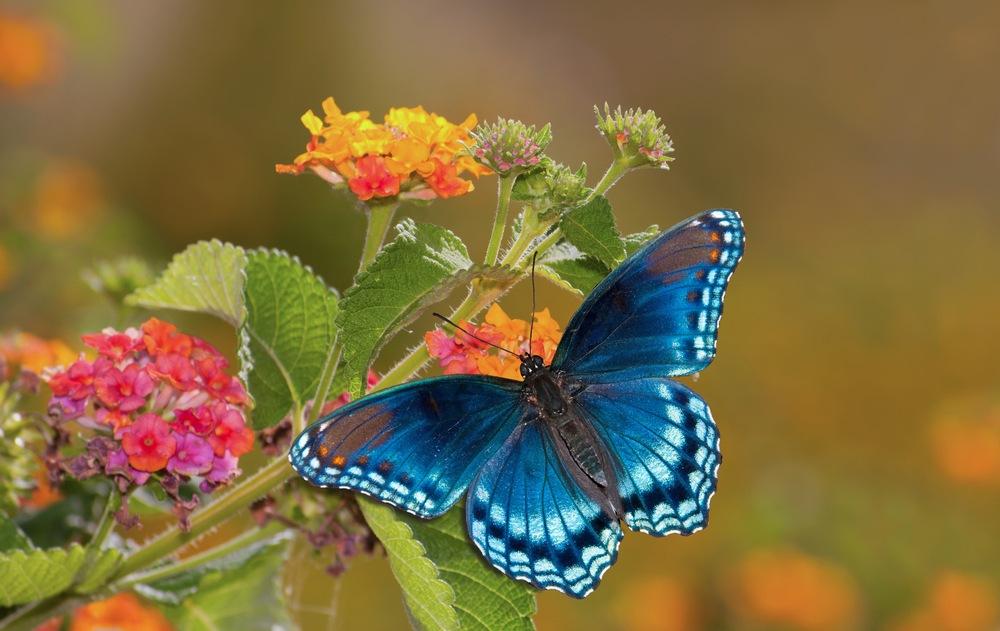 sonhar com borboleta azul