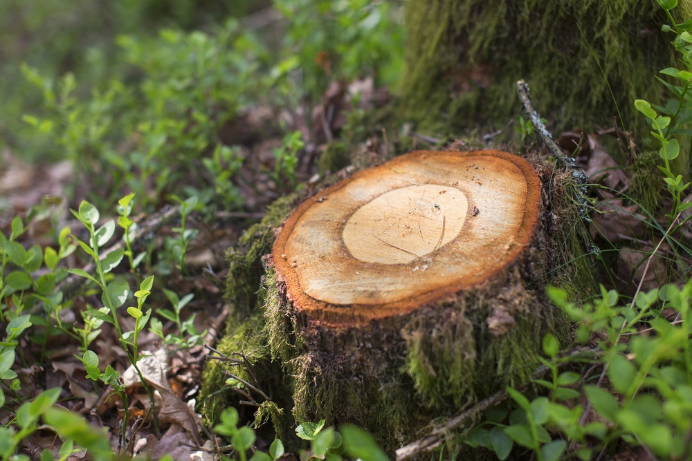 sonhar com árvore cortada