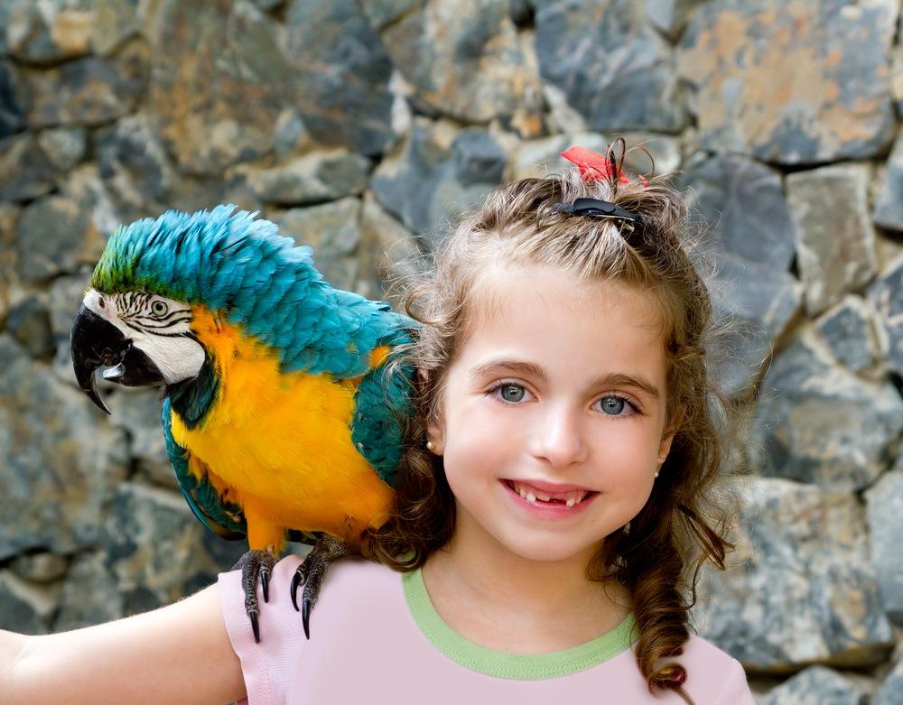 sonhar com papagaio no ombro