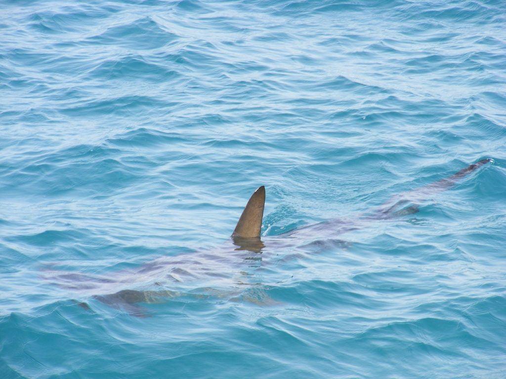 sonhar que é perseguido por um tubarão