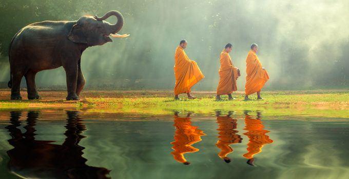 significado de elefante