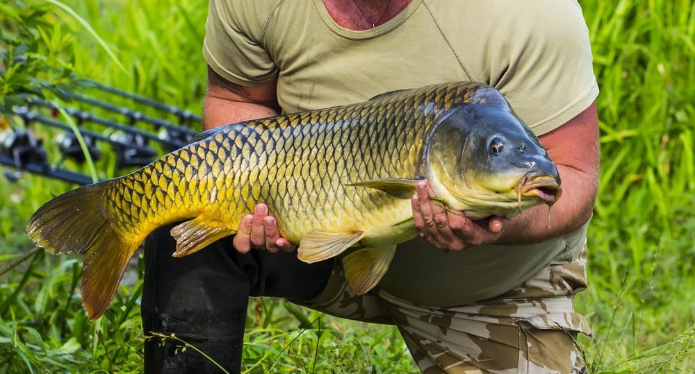 sonhar que segura um peixe grande