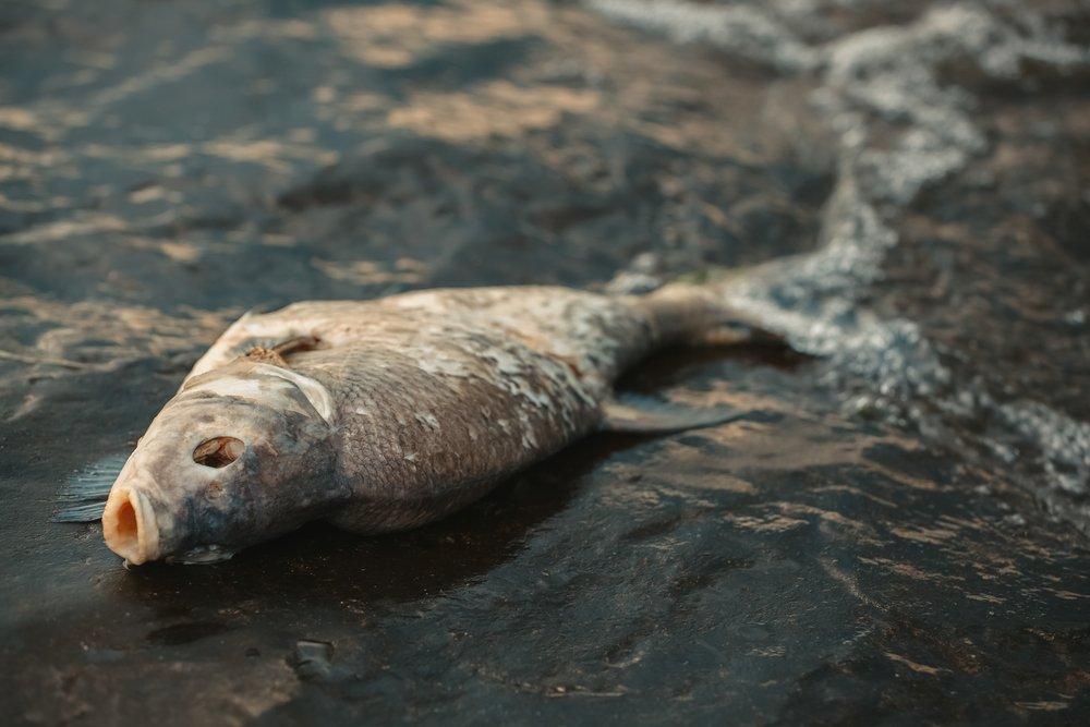sonhar que vê um peixe morto
