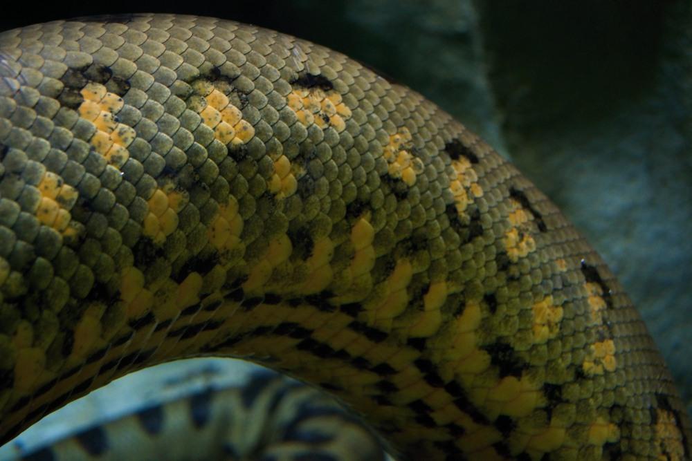 sonhar que vê cobra grande