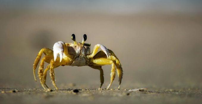 sonhar com caranguejo