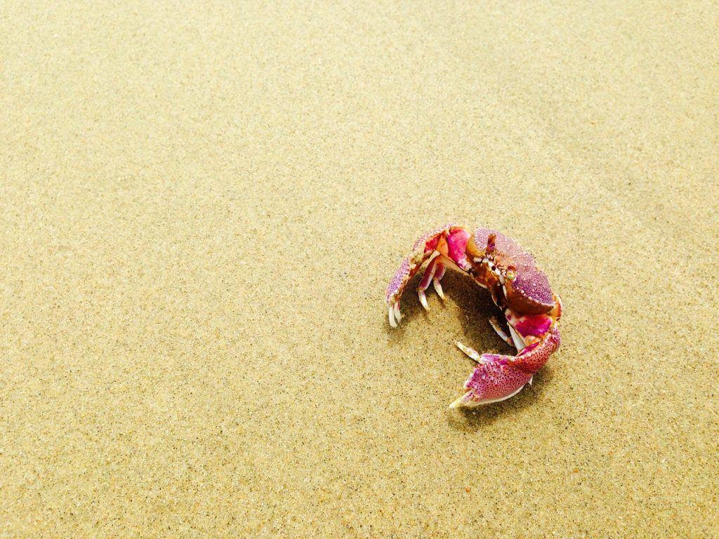 sonhar com caranguejo na areia