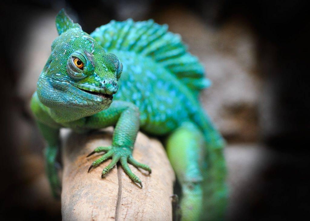 sonhar com lagarto verde