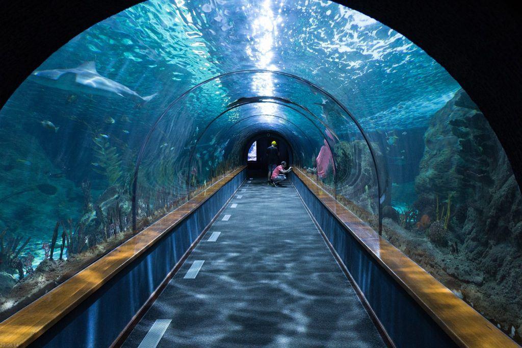sonhar que vê um aquário