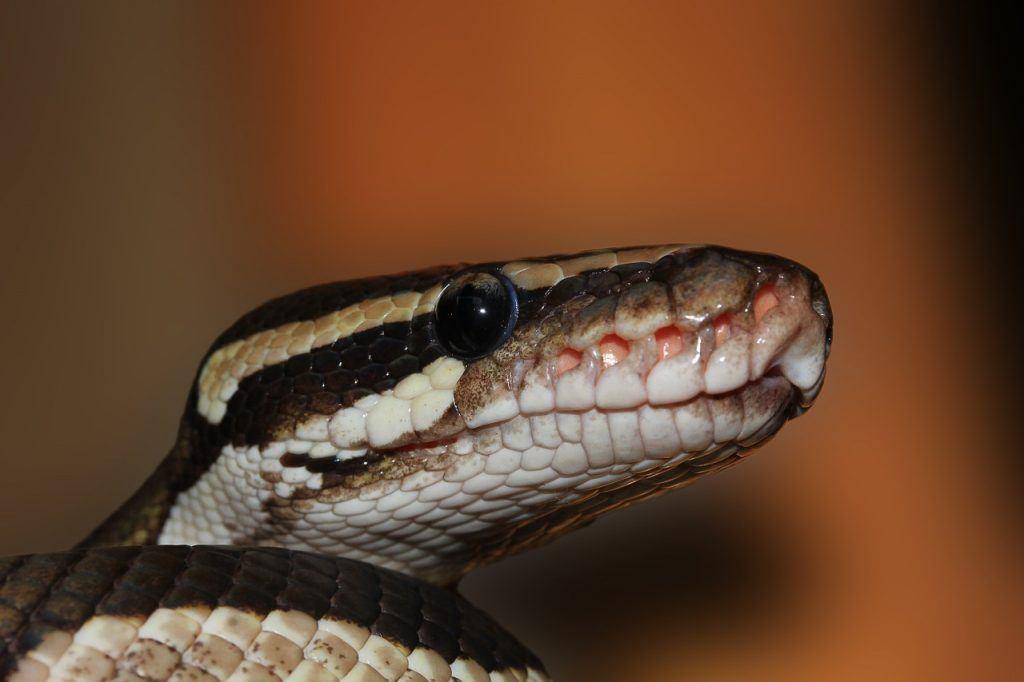 sonhar que vê uma cobra marrom