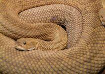 sonhar que vê uma cobra cascavel
