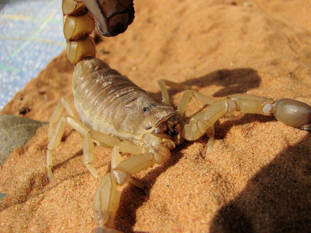 sonhar que vê um escorpião amarelo