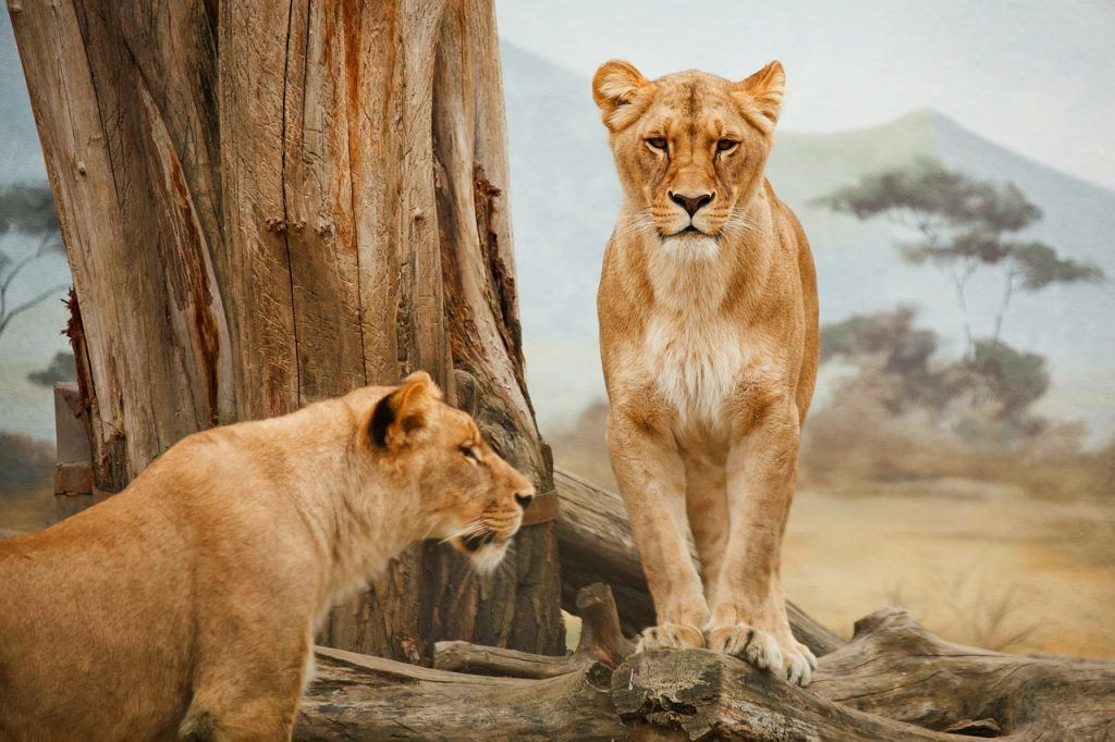 sonhar que vê uma leoa