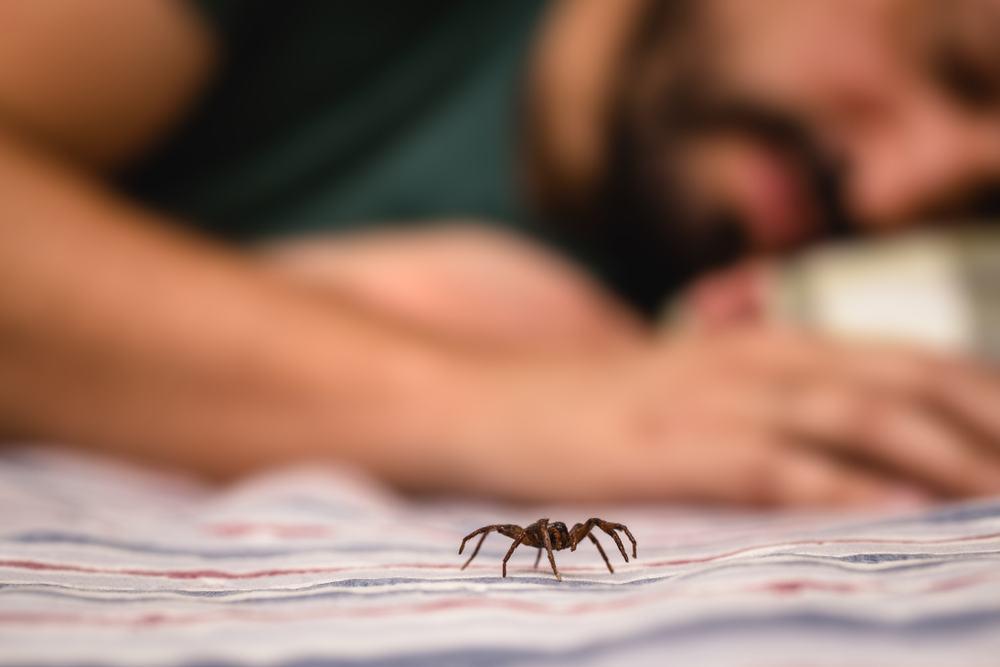 O que significa sonhar com picada de aranha?