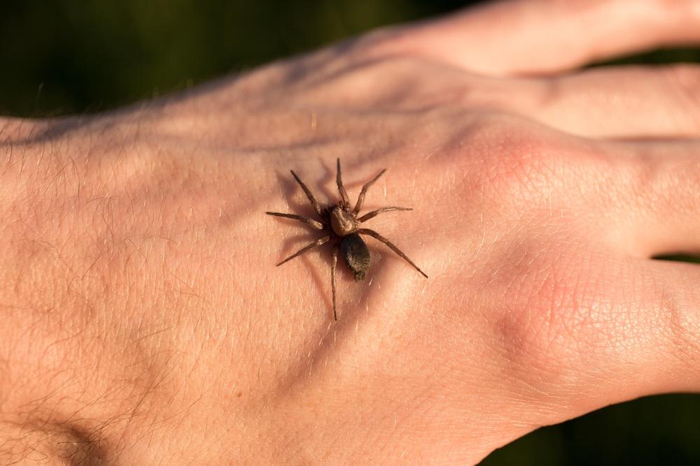 Sonhar que leva uma picada de aranha