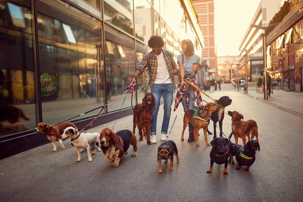 O que significa sonhar com muitos cachorros?