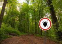 O que significa sonhar com insetos?