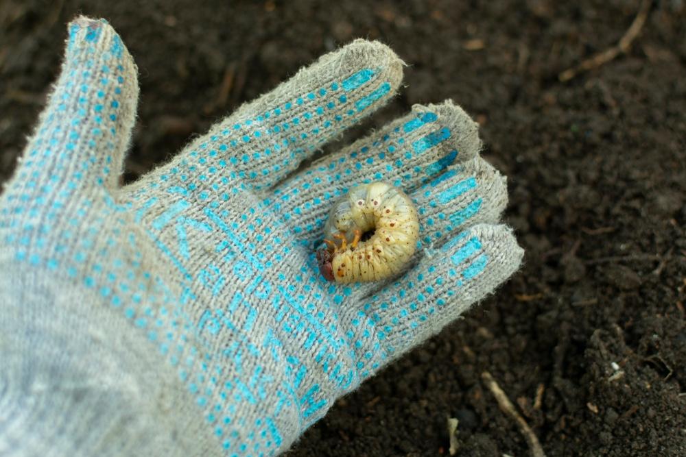 O que significa sonhar com larvas?