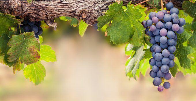 O que significa sonhar com uva?