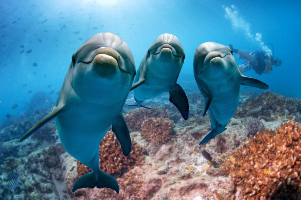 O que significa sonhar com golfinho?