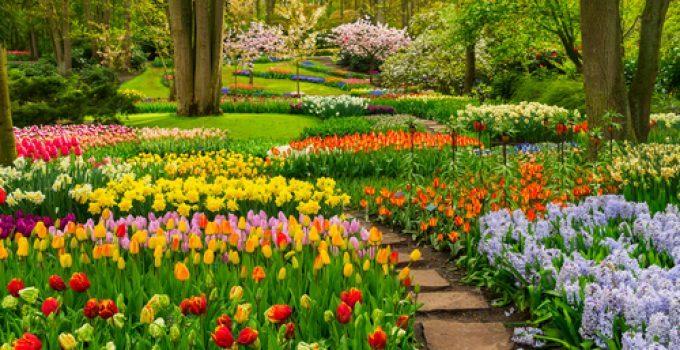 O que significa sonhar com jardim?