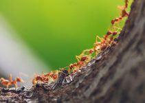 O que significa sonhar com formigueiro?