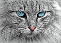 O que significa sonhar com gato cinza?