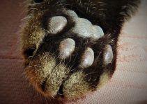 O que significa sonhar com gato morto?