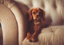 O que significa sonhar com cachorro marrom?