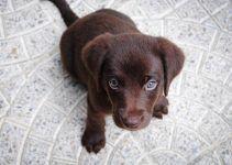 O que significa sonhar com filhote de cachorro?