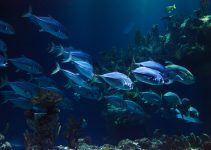 O que significa sonhar com muitos peixes?
