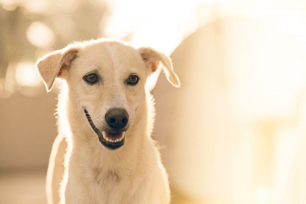 O que significa sonhar com cachorro branco?