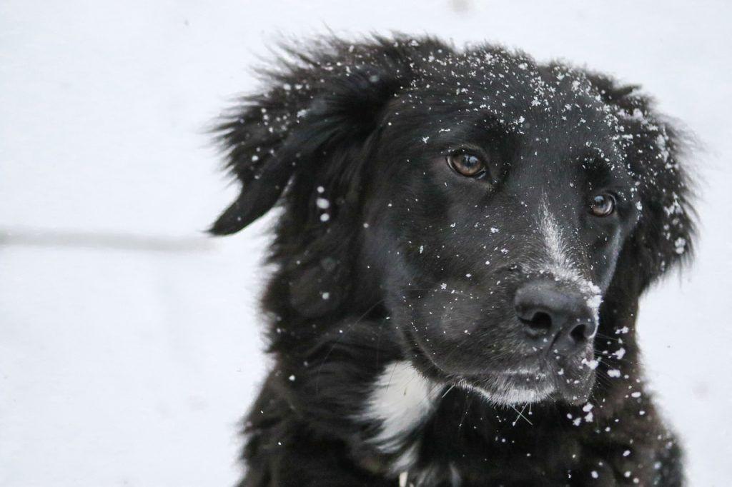 O que significa sonhar com cachorro preto?