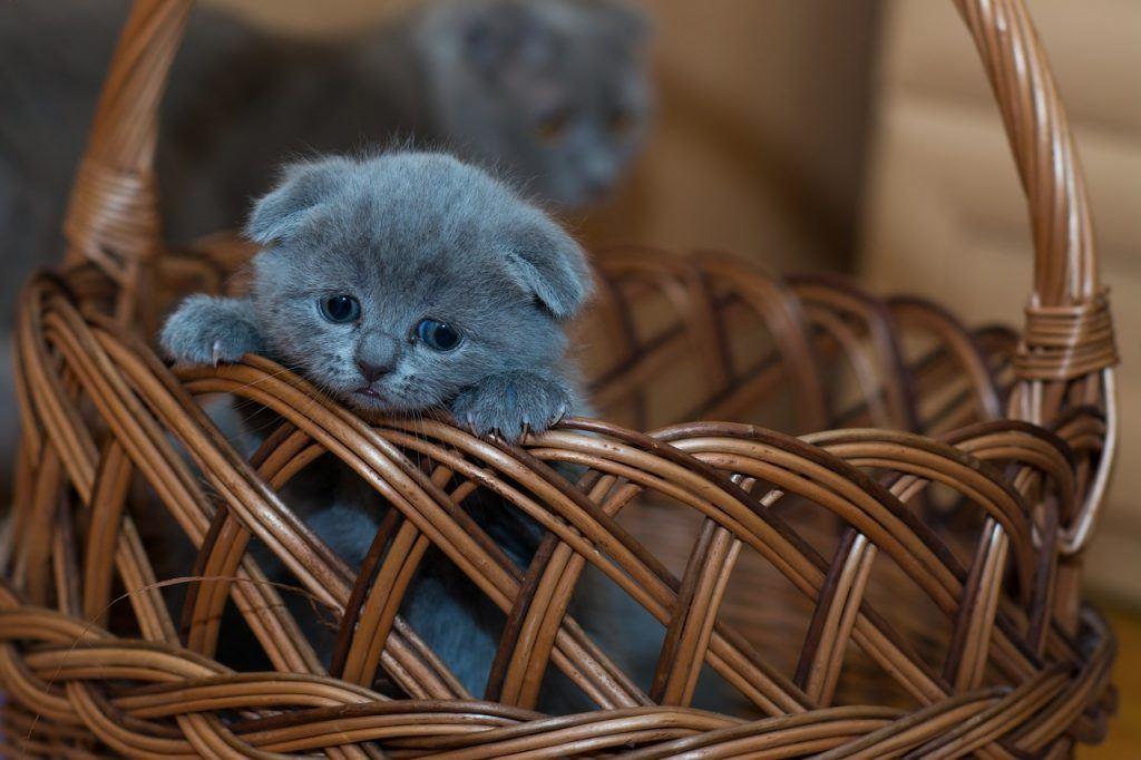 O que significa sonhar com filhote de gato?