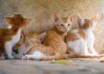 O que significa sonhar com muitos gatos?