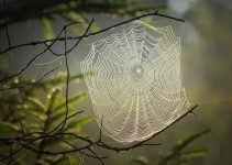 O que significa sonhar com teia de aranha?