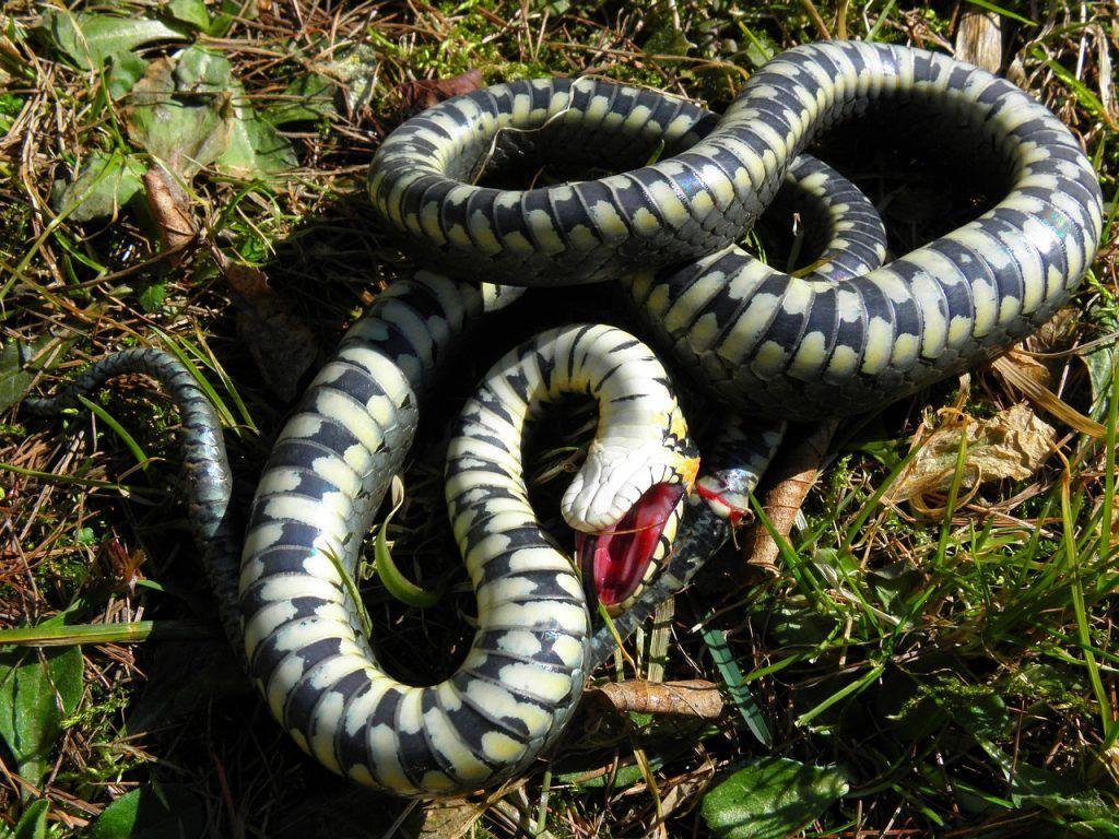 O que significa sonhar que matou uma cobra?