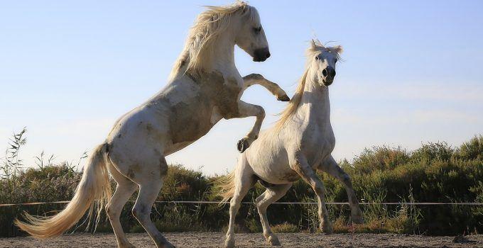 O que significa sonhar com cavalo bravo?