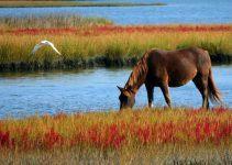 O que significa sonhar com cavalo marrom?