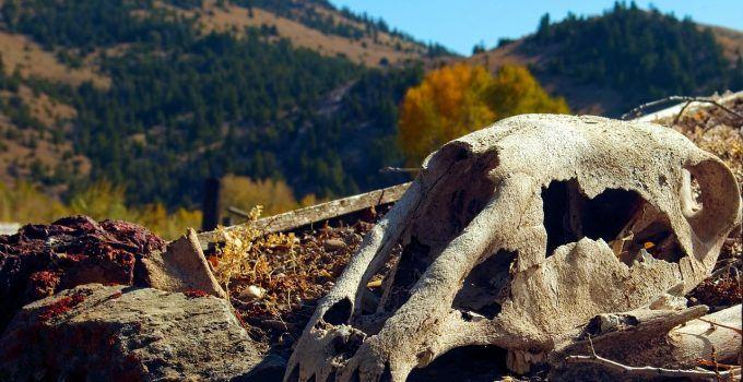 O que significa sonhar com cavalo morto?