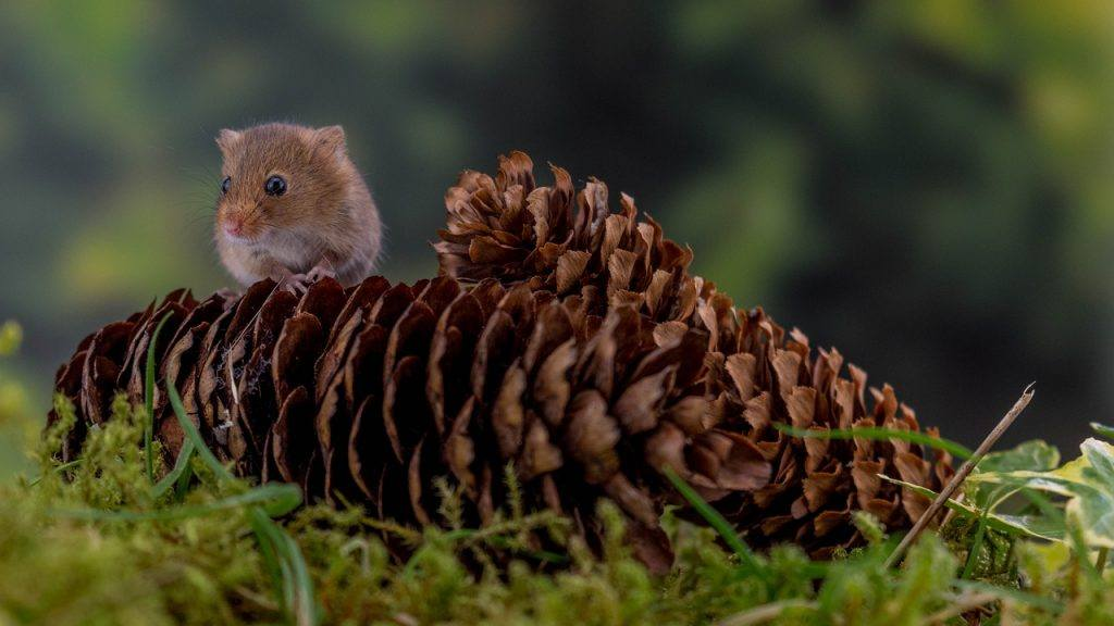 O que significa sonhar com filhote de rato?