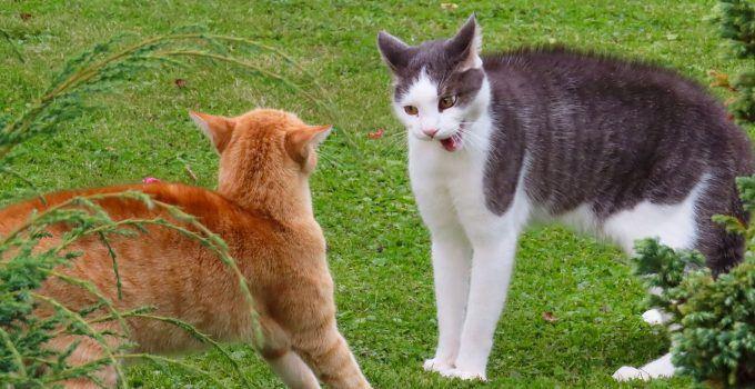 O que significa sonhar com gato atacando?