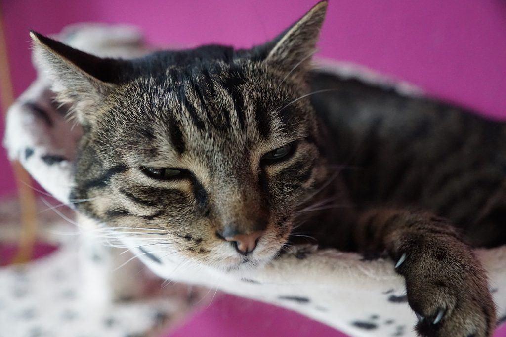 O que significa sonhar com gato machucado?