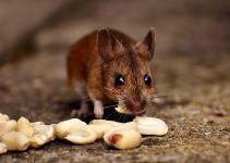 O que significa sonhar com rato mordendo?
